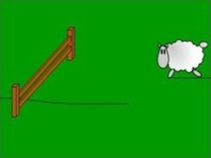 Sheeprace