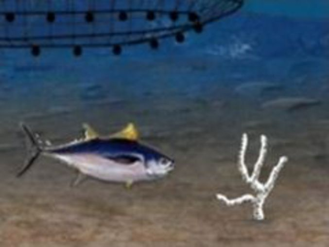 Ocean Survivor