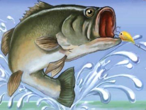 Bild zu Sport-Spiel Fishing Champion