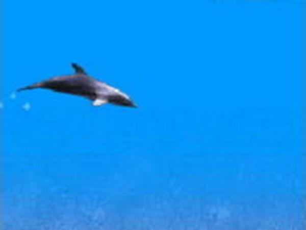 Bild zu Rennen-Spiel Dolphin Swimming