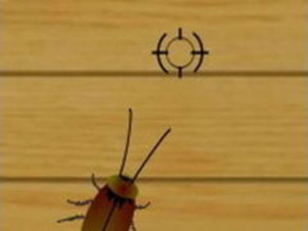 Bild zu Rennen-Spiel Lacucaracha