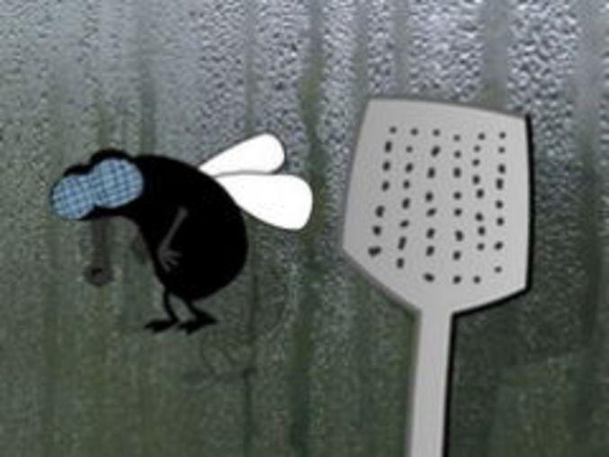Klatsch die Fliege