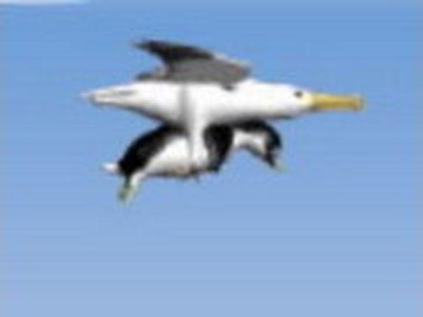 Bild zu Action-Spiel Yeti Albatros