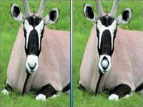 Bild zu Denken-Spiel 2 Images 5 Differences 6