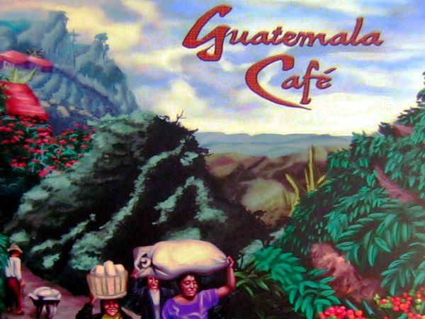 Bild zu Alle Brettspiele-Spiel Guatemala Café