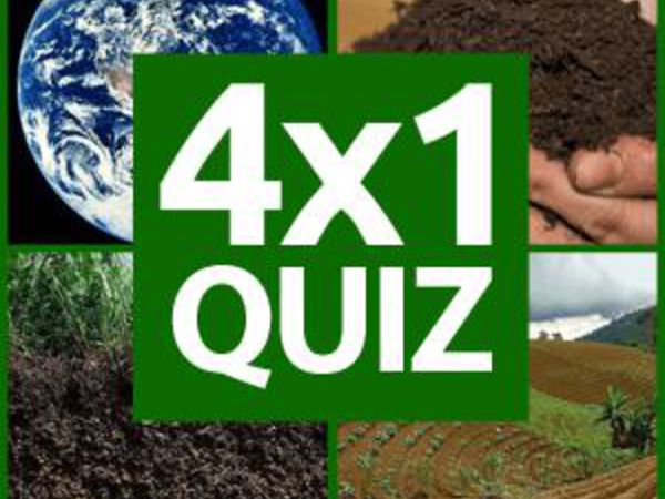 Bild zu Denken-Spiel Wordguess 4 Bilder
