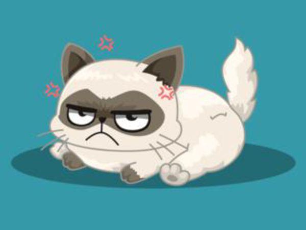 Bild zu Denken-Spiel Welche berühmte Katze bist du?